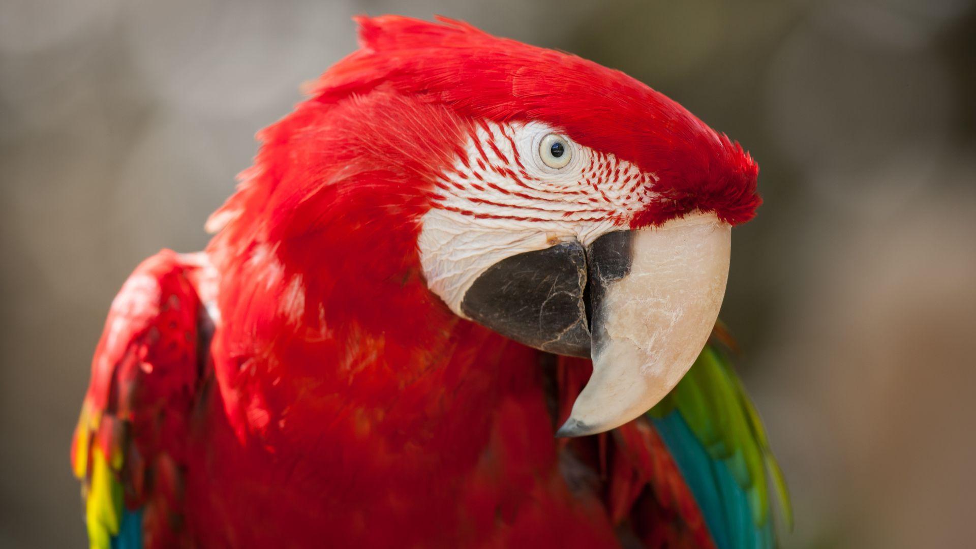 Wallpaper Macaw Parrot Cute Animals Animals 4495